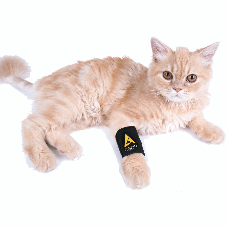 cat wearing front leg brace