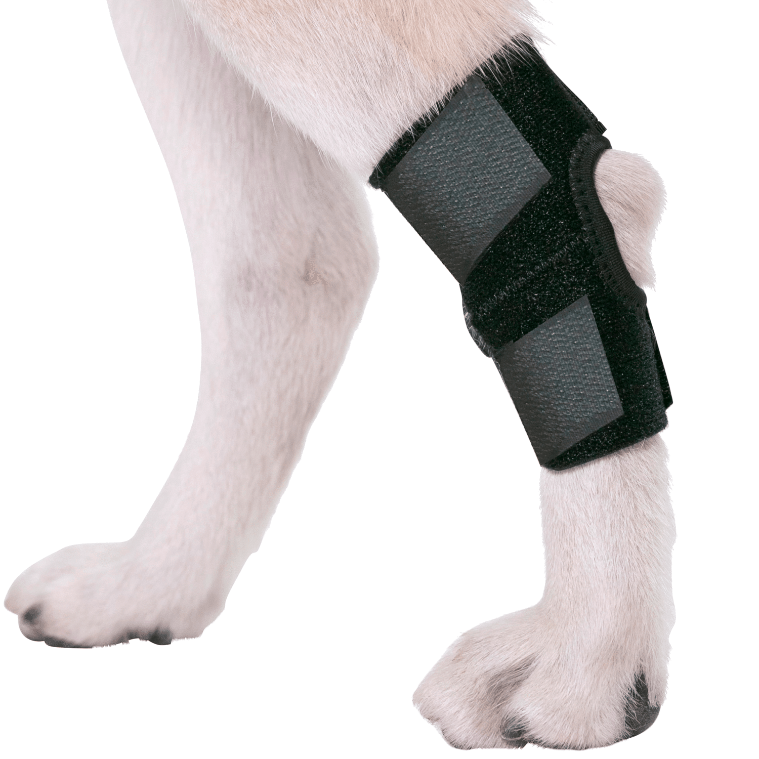 DS003Y hock brace for dog