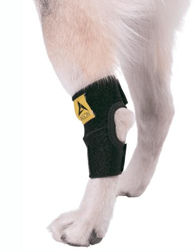 rear leg dog