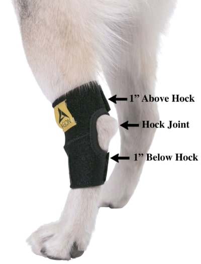 DS003Y dog hock brace Size chart by AGON