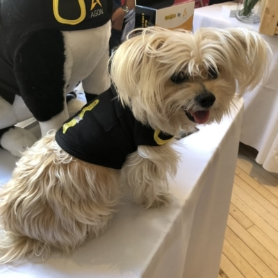CozyVest Dog Anxiety Vest