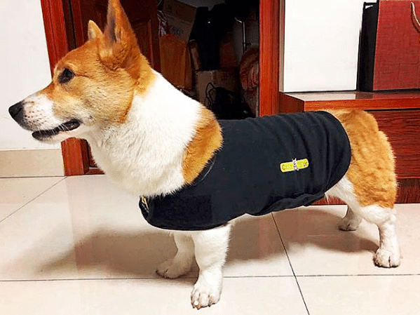 Cozyvest Dog Anxiety Vest With Relaxing Music & Essential Oils