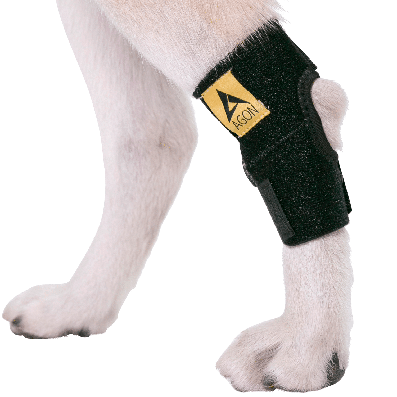 leg braces for dogs