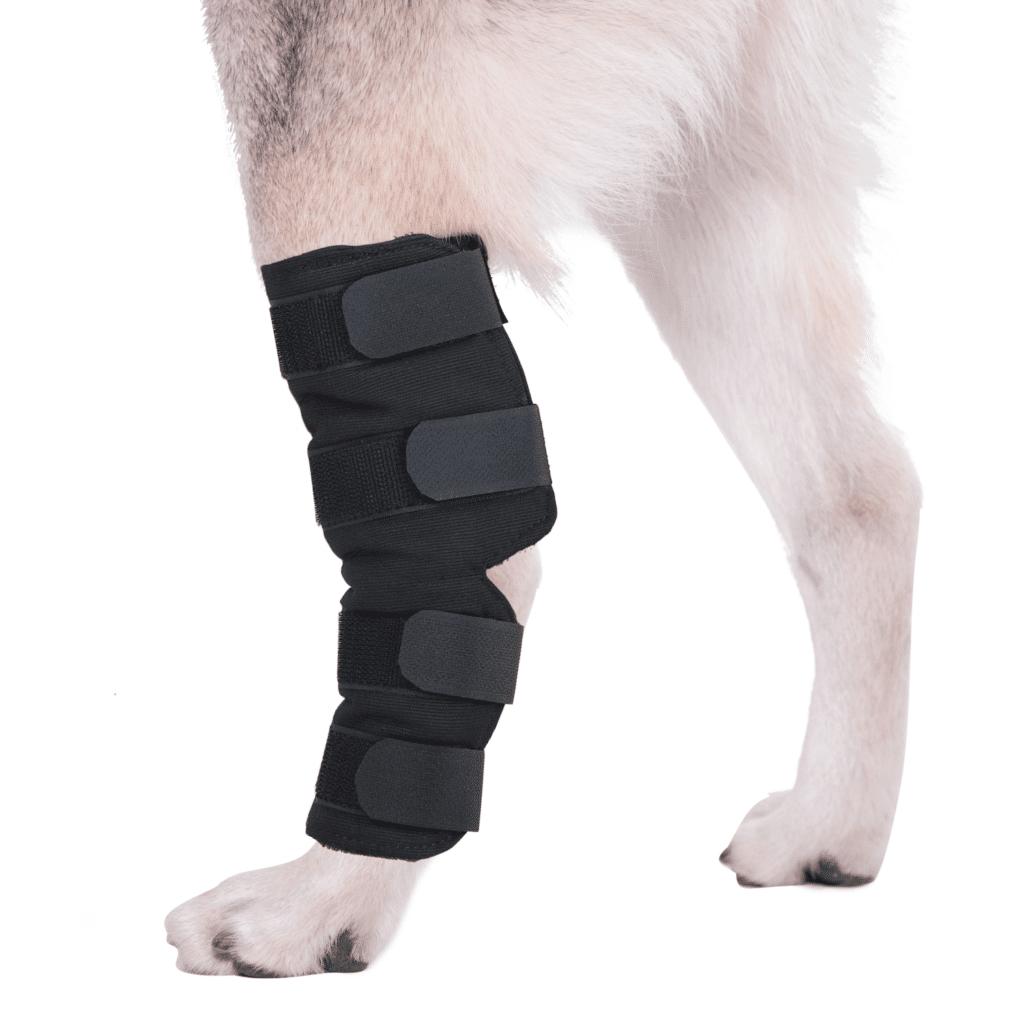 Extra supportive Dog hock brace