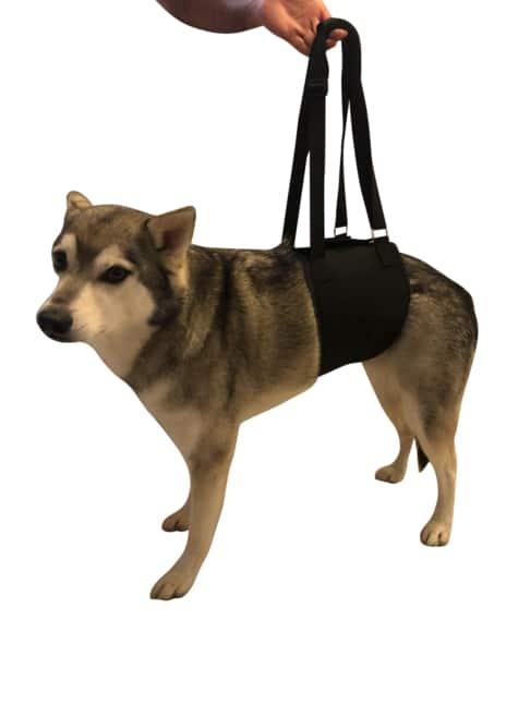 sling agon pose