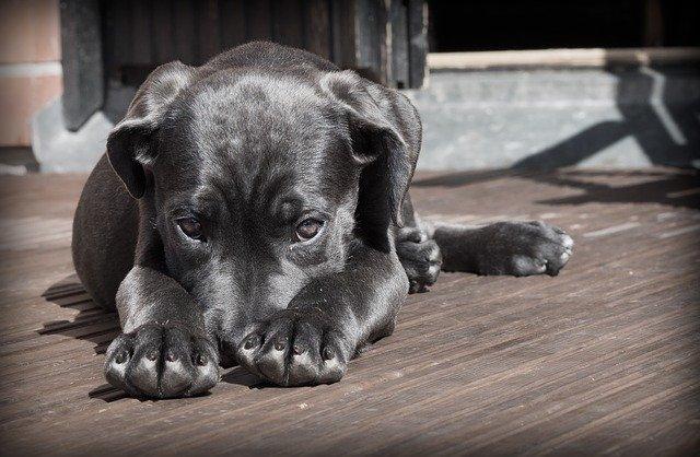 leg brace for dogs