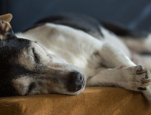 Older Dog Back Legs Collapsing – What Are The Best Treatments?