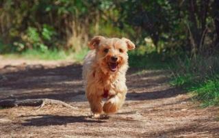 Dog Bites Ankles - dog running around