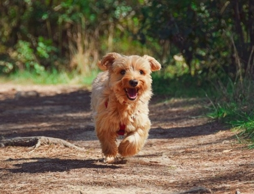 Dog Bites Ankles – What are The Best Ways to Deal with It?